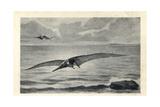 Pteranodon Longiceps Giclee Print by J. Smit