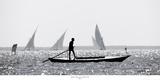 Egypte - Pêche sur le Delta du Nil 2 Pósters por Philip Plisson