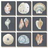 Shells on Slate Art by Megan Meagher