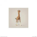 Giraffe Posters by John Butler