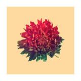 Flower Giclee Print by Budi Kwan
