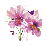 Orchid Blush Prints by Summer Thornton