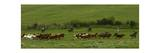 Wyoming. Herd of Horses Photographic Print by Stephen Vaughan