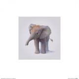 Elephant Posters af John Butler Art