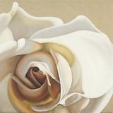White Rose Prints by Carolina Alotus