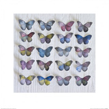 Butterfly Grid Prints by Howard Shooter