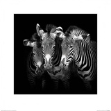 Shades of Grevy Affiches par Marina Cano