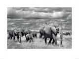 Elephants of Kenya Kunstdruck von Marina Cano