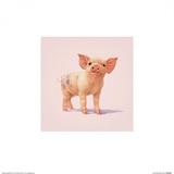 Schwein Poster von John Butler Art