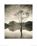 Silver Birch - Buttermere Affiches par Mike Shepherd
