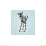 Zebra Poster by John Butler Art