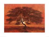 Desert Tree Prints by Jonathan Sanders