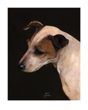 Jack Russell Study Reprodukcje autor Jane Booth