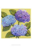 Spring Hydrangeas I Print by Tim O'toole