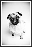 Piggie 7 Poster by Susan Sabo