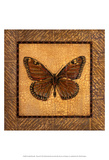 Crackled Butterfly - Monarch Poster by Wendy Russell