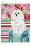Della Rose Maltese Posters by Carolee Vitaletti