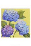 Spring Hydrangeas II Prints by Tim O'toole