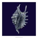 Indigo Shells VI Giclee Print by Vision Studio