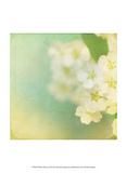 White Flowers II Prints by Jennifer Jorgensen