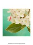 White Flowers IX Posters by Jennifer Jorgensen