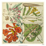 Catesby Botanical Quadrant III Giclée-Druck von Mark Catesby