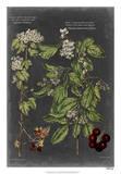 Vintage Botanical Chart VI Giclée-Druck von  Vision Studio