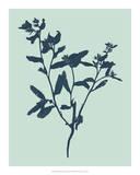 Indigo & Mint Botanical Study VII Giclee Print by  Vision Studio