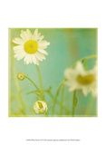 White Flowers IV Prints by Jennifer Jorgensen