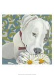 Dlynn's Dogs - Patch Posters by Dlynn Roll