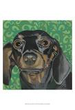 Dlynn's Dogs - Keelie Poster by Dlynn Roll
