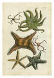 Starfish Illustre Giclee Print by Vision Studio