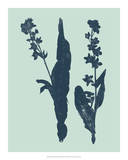 Indigo & Mint Botanical Study VIII Giclee Print by  Vision Studio