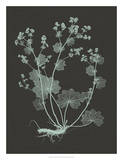 Mint & Charcoal Nature Study I Giclee Print by Vision Studio