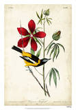 Audubon Bird & Botanical I Impression giclée par John James Audubon