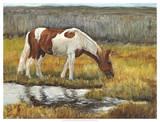 Meadow Munching Giclee Print by Kathy Winkler