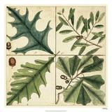 Catesby Leaf Quadrant III Giclee Print by Mark Catesby
