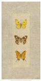 Butterfly Trio I Giclee Print by Wendy Russell