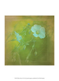 White Flowers VI Prints by Jennifer Jorgensen