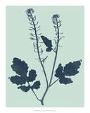 Indigo & Mint Botanical Study I Giclee Print by  Vision Studio