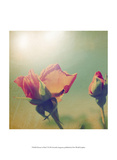 Dream in Pink V Poster by Jennifer Jorgensen