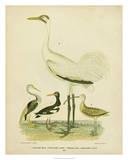 Antique Crane & Heron Wydruk giclee autor Alexander Wilson