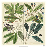 Catesby Leaf Quadrant I Giclee Print by Mark Catesby