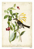 Audubon Bird & Botanical II Giclee Print by John James Audubon