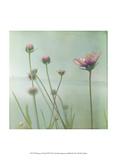 Waiting on Purple VIII Prints by Jennifer Jorgensen