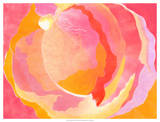 Cabbage Rose III Giclee Print by Carolyn Roth