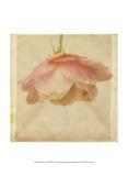 Dream in Pink XIII Poster di Jennifer Jorgensen