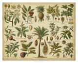 Classification of Tropical Plants Giclée-Druck von  Vision Studio