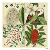 Catesby Botanical Quadrant II Giclee Print by Mark Catesby