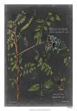 Vintage Botanical Chart VII Giclée-Druck von  Vision Studio